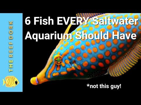 6 Easy Fish EVERY Marine Tank Should Have!