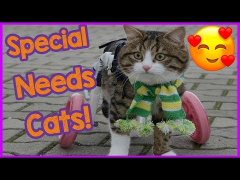 Caring for special needs cats - Cat Care Tips!