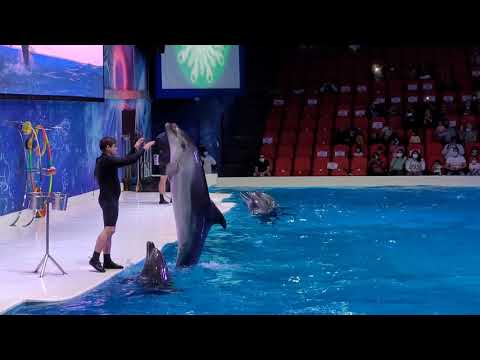 Saw this first time in my life Dubai Dolphinarium  dolphin show