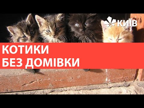 У Солом'янському районі вандали зруйнували будиночки для кошенят