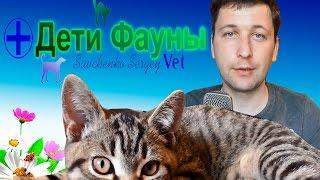 Опухоль языка у кошки. Автор ветеринар