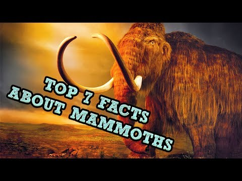 Top 7 Facts About Mammoths