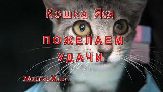 Котёнок Яся Пожелаем Удачи