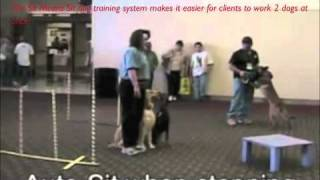 Easier To Train 2 Dogs At Once With Sit Means Sit System