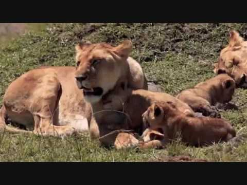 Safari Live's Masai Mara Safari Drive at 5:00 AM on July 10, 2017