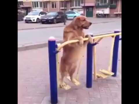 Spor Yapan Köpek