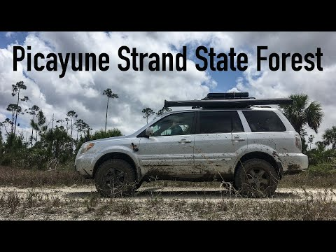 Picayune Strand State Forest