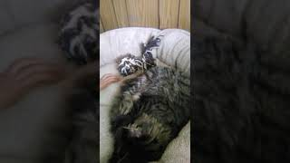 Time lapse of cute kitten baby💕🐈🐱