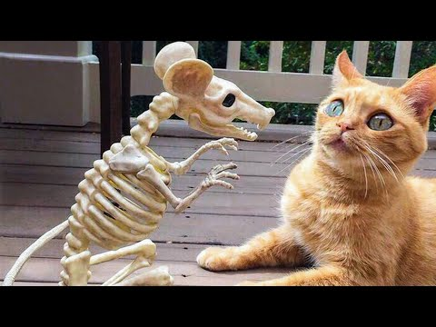 🤣 Funniest 🐶 Dogs and 😻 Cats - Awesome Funny  Animals Videos 😇