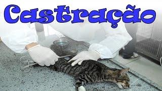 Castração de gatos. #44