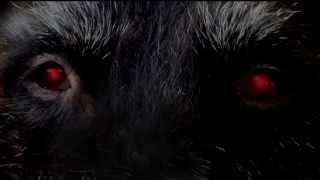 """Buch-Trailer: """"Ondragon - Menschenhunger"""""""