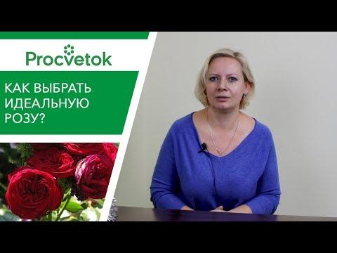 Вопрос: Какие бывают сорта роз Каких цветов бывают розы?