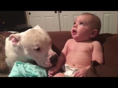 Pitbull Attacks Baby! With Kisses