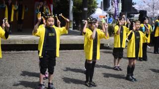 4月6日 松坂城跡での宣長祭りでの鈴踊りです.