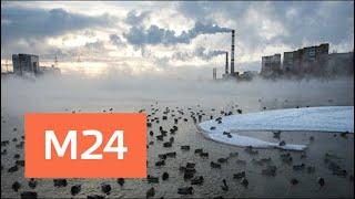 """""""Климат-контроль"""": какие сюрпризы подготовила погода в начале февраля - Москва 24"""