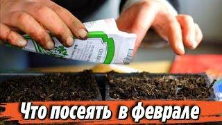 Что посеять в феврале на рассаду Сроки посева семян Советы для дачников и огородников