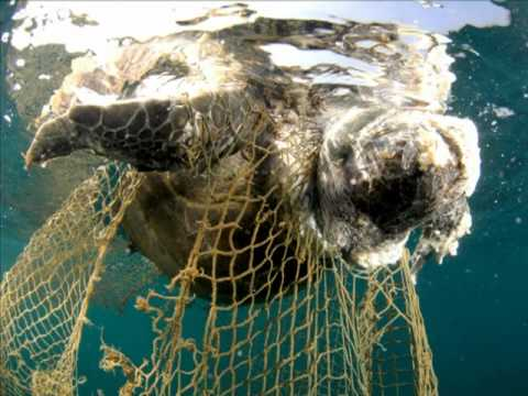 Driftnet fishing and conservation youtube for Drift net fishing