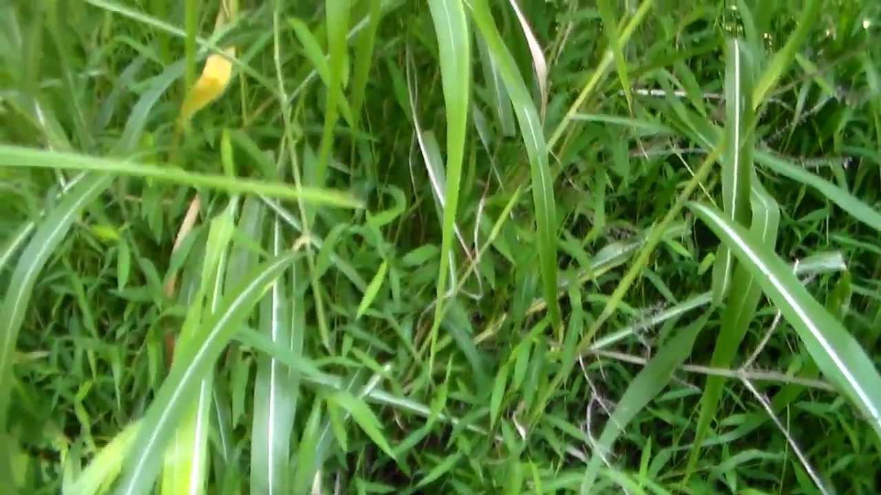 Image Result For Weed Killer For Gr