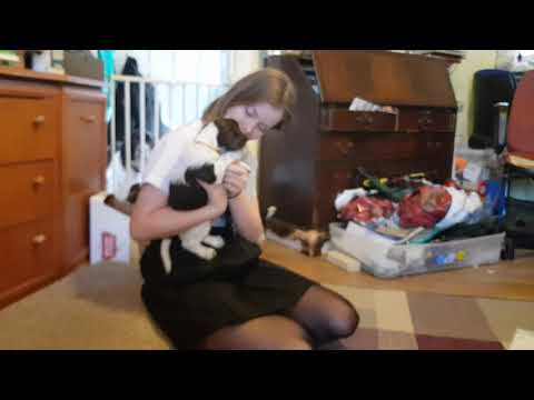 Morning Puppys Breakfast Time 5 Week Old English Springer Spaniels, ESS Puppy, Puppies, Puppy