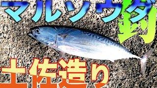 堤防で美味しい魚を釣ろう! ソウダガツオで土佐造り Surf-fishing