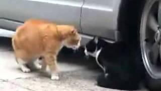 Кот-Гопник(Bad CAT!)