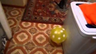 Барсик и воздушный шарик (кот прикол)