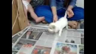 Yavru Köpek Satışı,Her Cins Satılık Yavru Köpekler.mp4