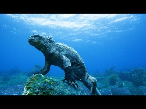Cryptozoology | Pacific Ocean Paradise HD | National Geographic | The Best Attacks Of Wild Animals