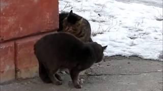Мартовские коты.wmv