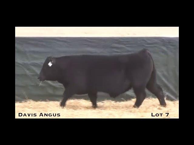 Davis Angus Lot 7