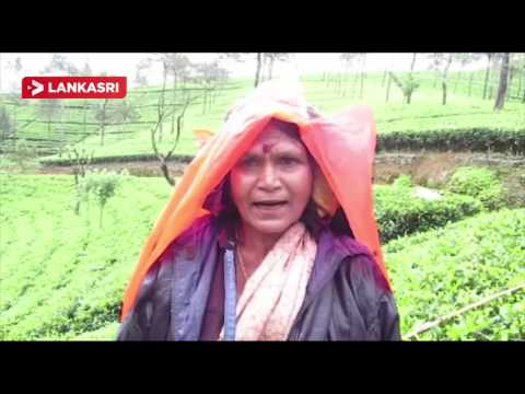 Struggle Of Tea Plantation Workers In Upcountry Srilanka
