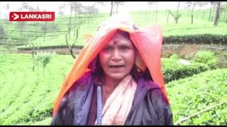Struggle of Tea Plantation Workers in Upcountry Srilanka