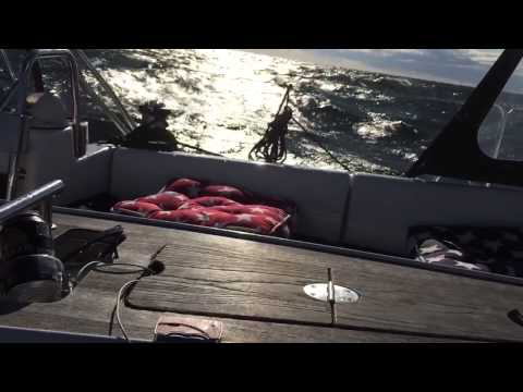 Sailing from Tallinn to Helsinki in windy weather, normal speed