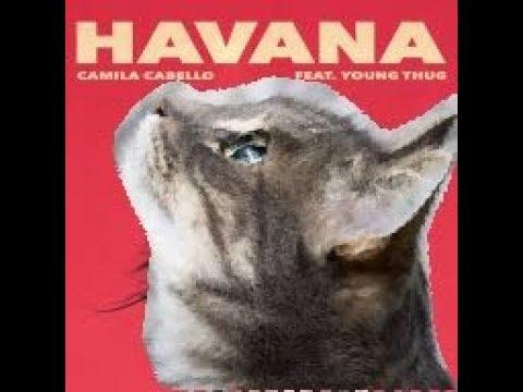 | Havana versión gatuna | cats singing Havana | Canción de los gatitos 3 | Havana cover |