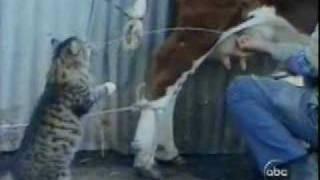 حليب من الصدر مباشرة  cat  & cow milk???