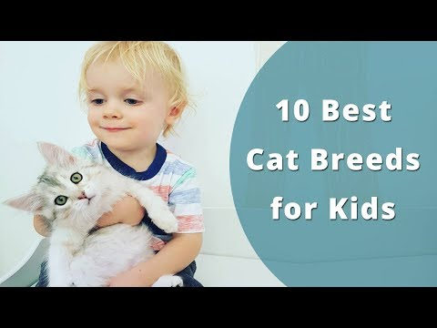 10 Best Cat Breeds for Kids | Child friendly Cats by Petworlds