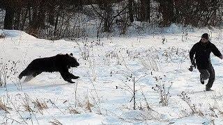 Приколы, неудачи и необычные случаи на охоте. Встреча с дикими животными.