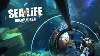 SEA LIFE Oberhausen - hier gibt es zahlreiche einzigartige Lebewesen unserer Flüsse und Meere