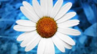 chris barber  , feat.monty sunshine , petite fleur
