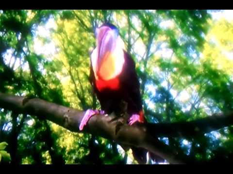 Toucan Song - In the night garden