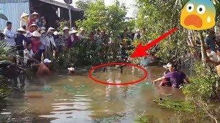Download Warga SeKampung Heboh Melihat Penangkapan ikan Air Tawar Berukuran Raksasa ini