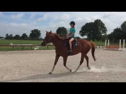 Versailles D2 pony clubber trot