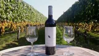 Visiting Wolffer Estate Vineyard, Sagaponack