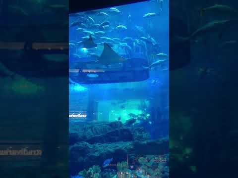 Dubai Aquarium & Underwater Zoo | The Dubai Mall #Shorts