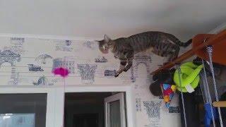 Позитивчик. Кошка-канатоходец. Уроки пения для кошки :)