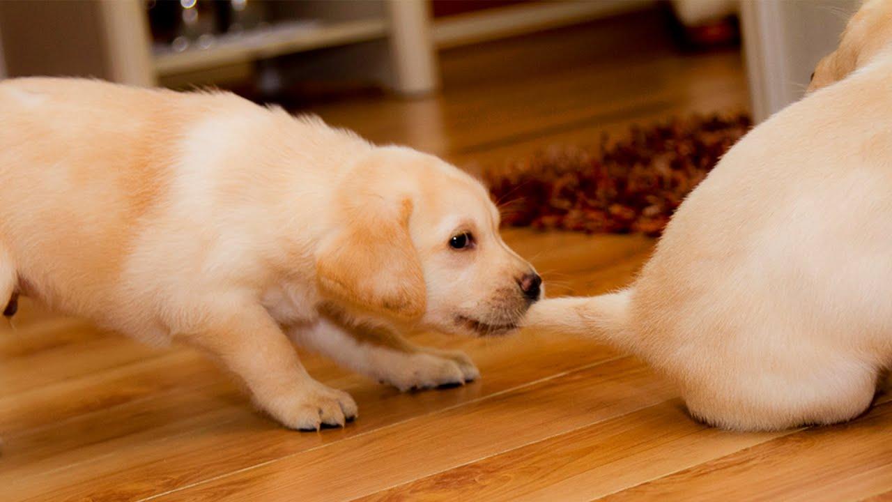 Lustige Pups Videos