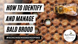 Identify and Manage Bald Brood