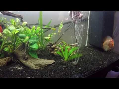 Aquarium ( JUWEL RIO 300) Watermaintenance