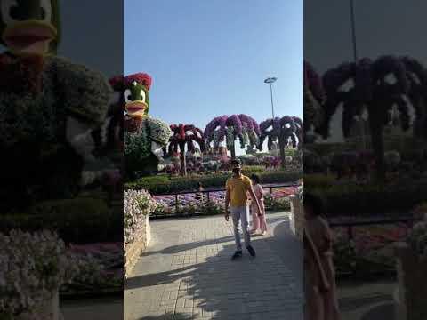 Dubai miracle garden dec 2020