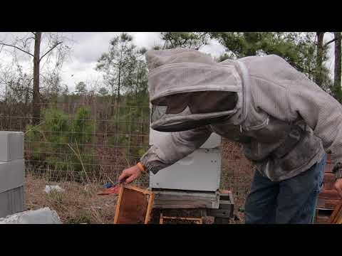 Let Play Checkers With The Bees. Late Winter Hive Inspection.